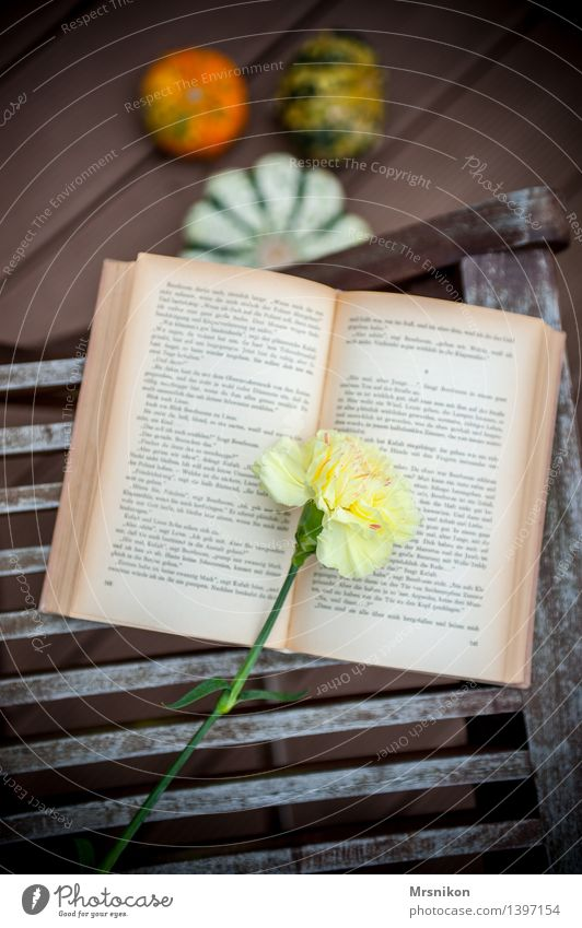 carnation Media Print media Book Reading Beautiful Page Dianthus Reading matter Bookworm Flower Pumpkin Pumpkin time Autumnal Relaxation Restorative