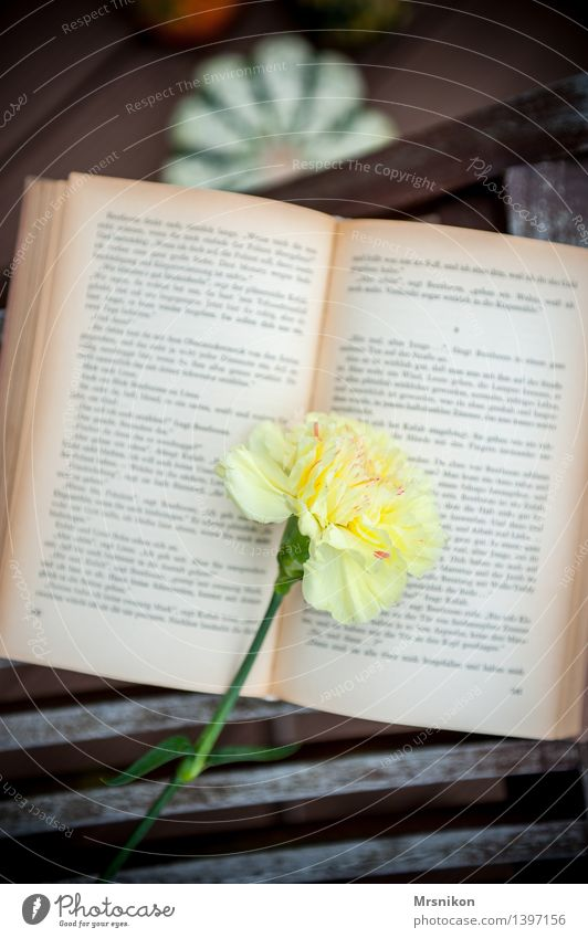 carnation Print media Reading Study Yellow Contentment Calm Know Time Reading matter Book Page Struck Dianthus Leisure and hobbies Relaxation Education Happy