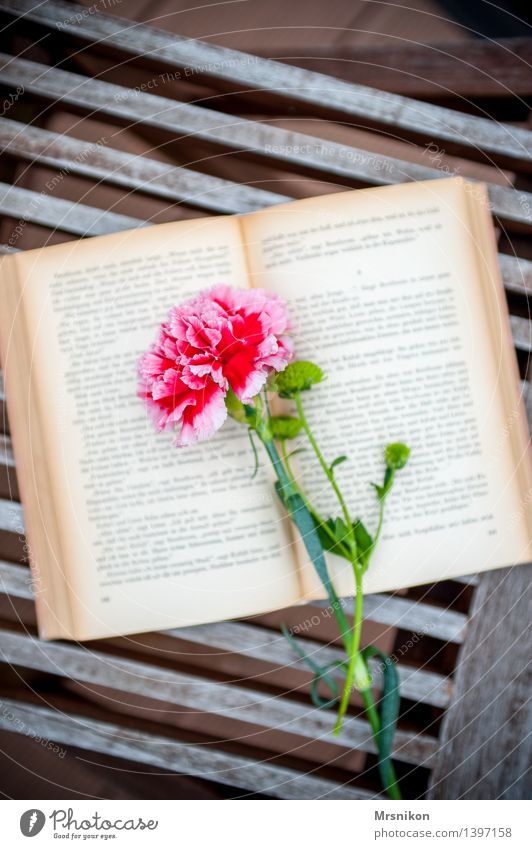 Books Media Print media Reading Study Uniqueness Page Relaxation Leisure and hobbies To enjoy Hit Writer Think Dianthus Flower Autumn Colour photo Exterior shot
