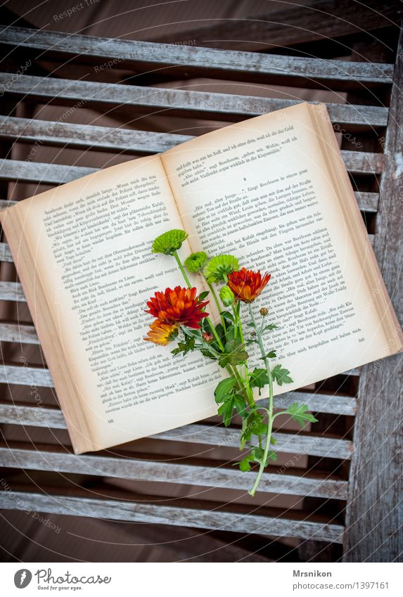love of books Media Print media Book Reading Study Page Classic Leisure and hobbies Aster Flower Bouquet Bookworm Autumnal Terrace Colour photo Subdued colour