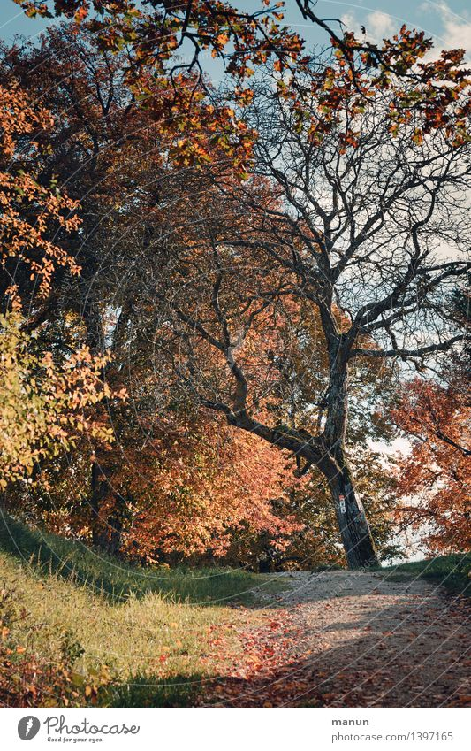 shouted down Nature Landscape Autumn Beautiful weather Tree Autumnal Autumn leaves Early fall Autumnal colours Automn wood Natural Blue Brown Multicoloured