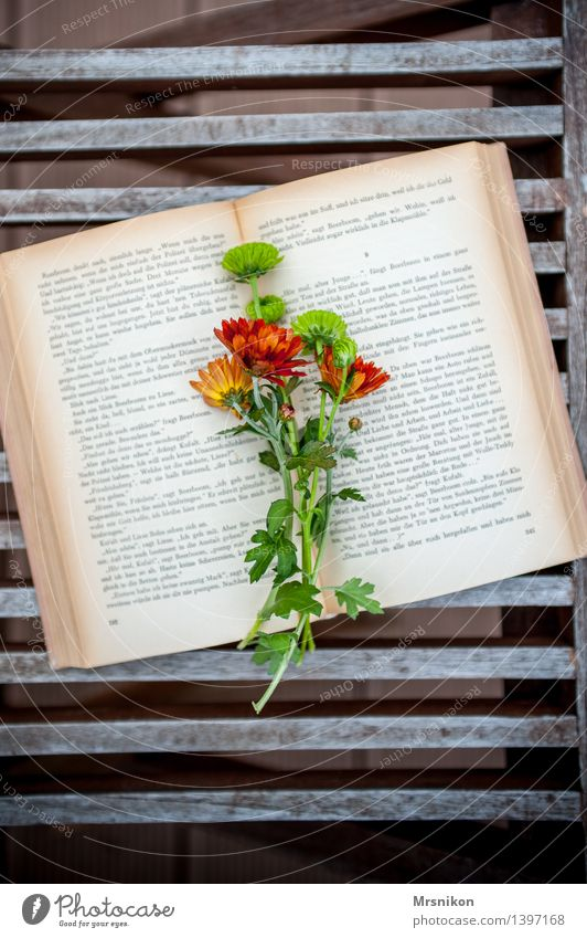 book Media Print media Book Reading Study Page Reading matter Relaxation Education Decoration Flower Bouquet Lovely Colour photo Subdued colour Exterior shot