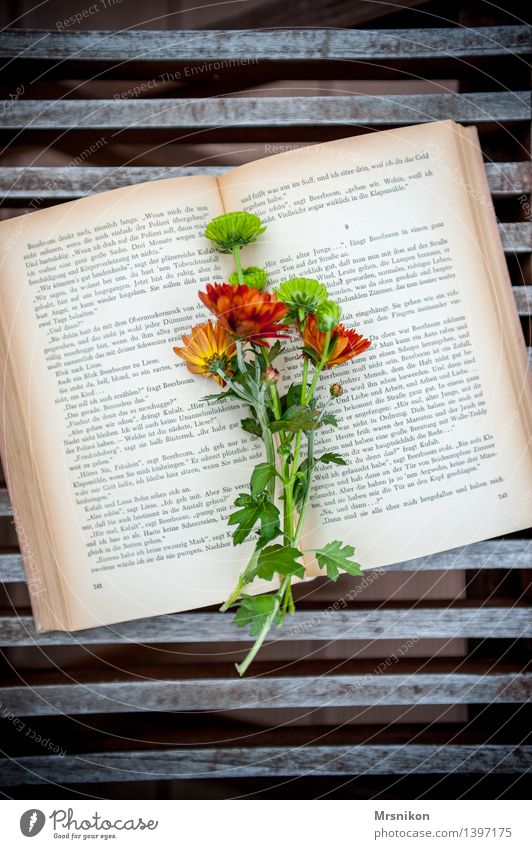 reading Print media Book Reading Study Page Reading matter Leisure and hobbies Aster Bouquet Flower Embellish Autumnal Relaxation Think Colour photo