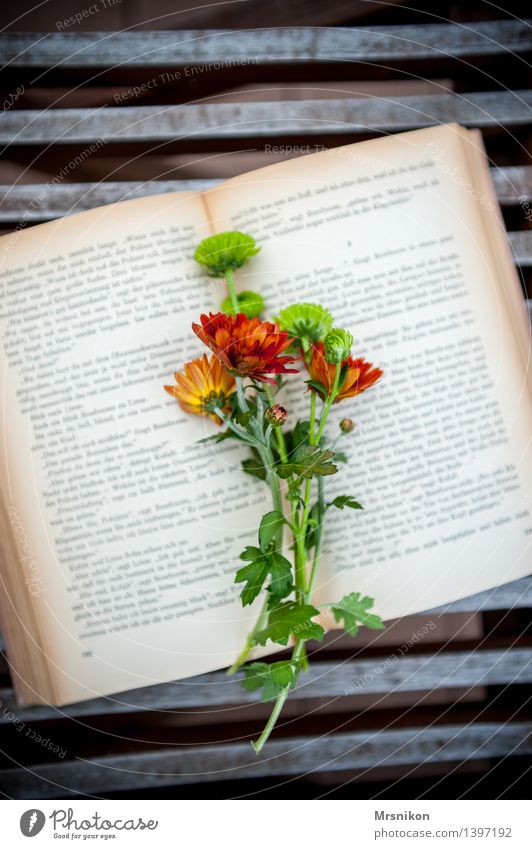 Green Relaxation Warmth Autumn Think Decoration Book Reading Break Bouquet Media Autumnal Page Print media Aster Hit
