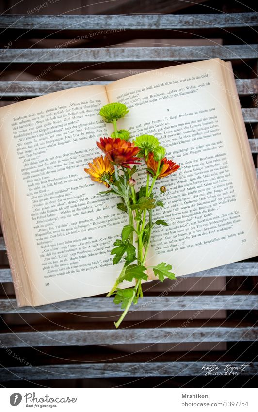 love of books Elegant Relaxation Calm Leisure and hobbies Reading Book Characters Ancient Flower Bouquet Lovely Page Aster Green Colour photo Exterior shot