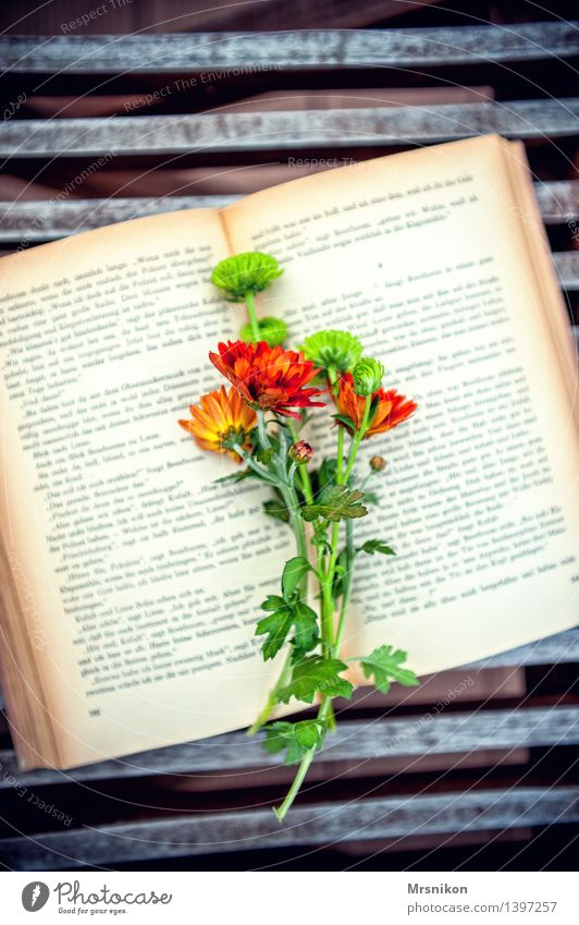 Fallada Print media Book Reading Page Flower Bouquet love of books Leisure and hobbies Aster Autumn Autumnal Hit Writer Colour photo Exterior shot Detail