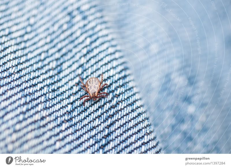 tick on jeans Health care Environment Nature Spring Summer Grass Bushes Garden Park Meadow Field Tick Wood tick Mite Hiking Illness TBE Stab wound Bite Transfer