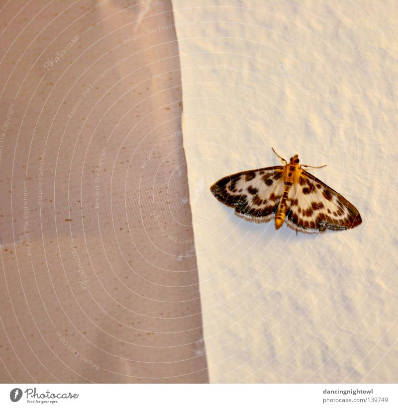 uninvited visitor. Insect Butterfly Flat (apartment) Room Summer Wall (building) Visitor Interior shot Animal Pattern Evening Light Bright Feeler Wing Fragile