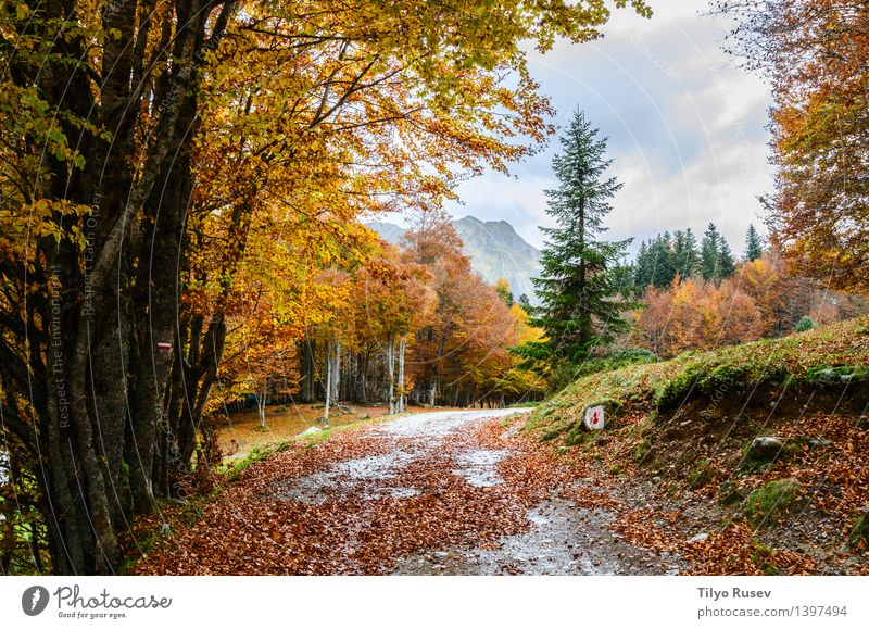 Pyrenees Atlantiques Nature Plant Green Beautiful Colour Sun Tree Red Landscape Leaf Forest Environment Yellow Street Autumn Lanes & trails