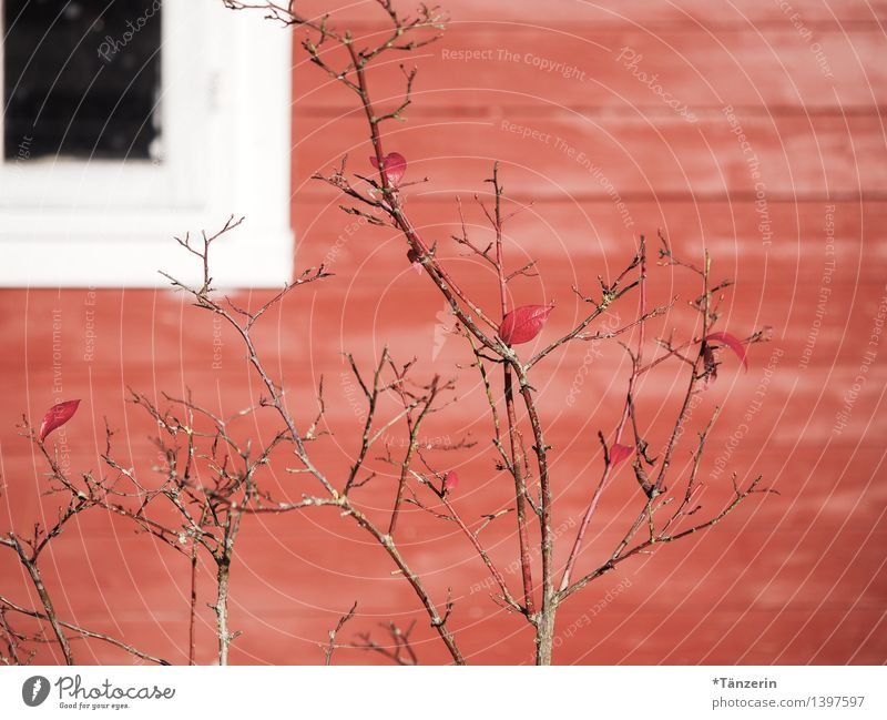 shades of red Bushes Garden Deserted House (Residential Structure) Hut Window Friendliness Positive Red Wooden house Colour photo Multicoloured Exterior shot