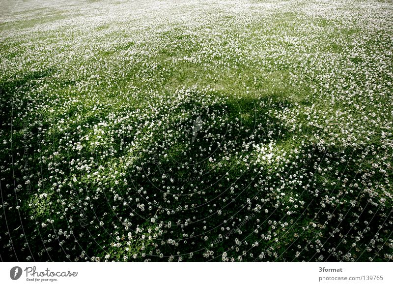 12 mm Wide angle Clover Meadow Field Park Structures and shapes Summer Might garden Landscape Level