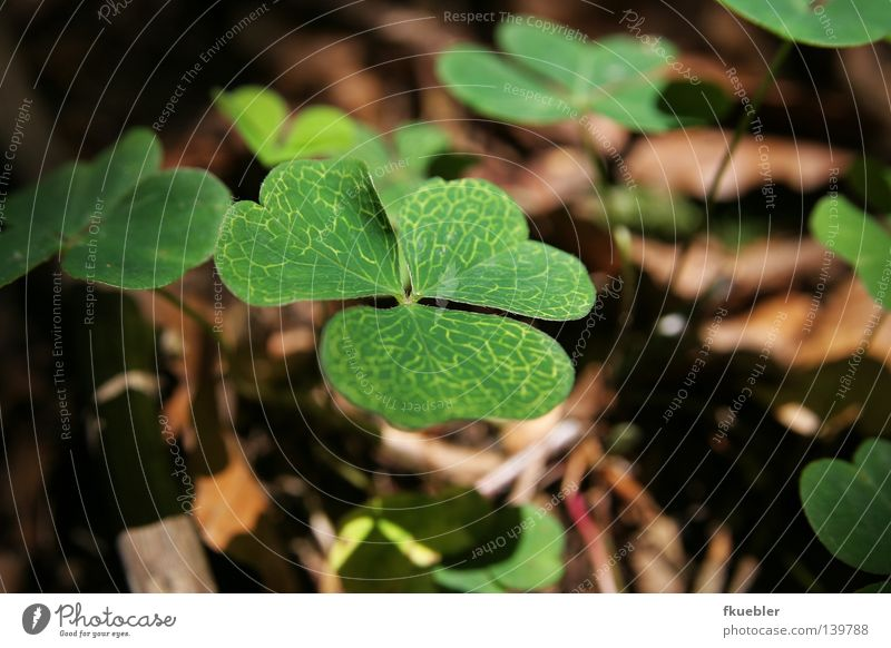 Nature Green Plant Loneliness Sadness Brown Wait Floor covering Grief Mysterious Maze Cloverleaf Woodground