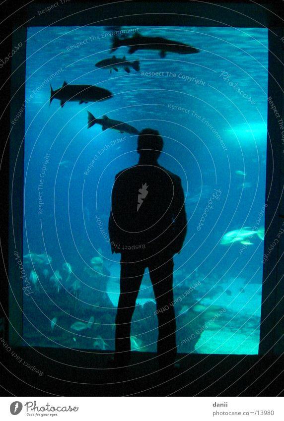 Man Water Blue Dark Masculine Fish Aquarium