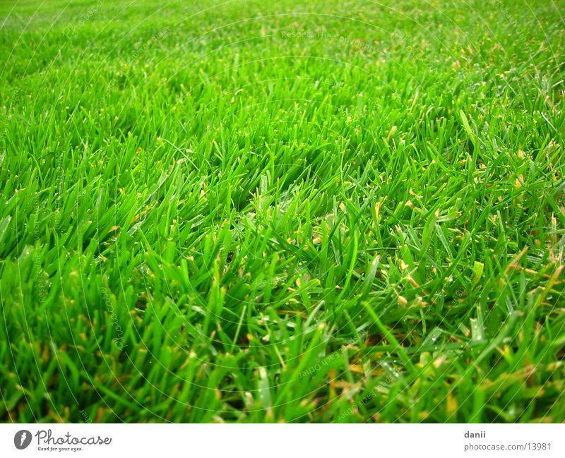 Green Meadow Wet Lawn