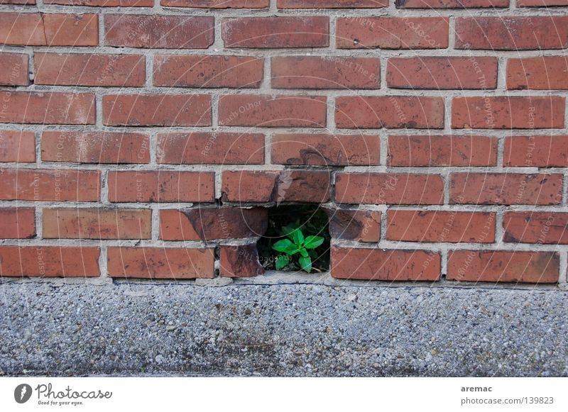 breakthrough Wall (building) Wall (barrier) Brick Red Plant Leaf Light Derelict Success Freedom Hollow