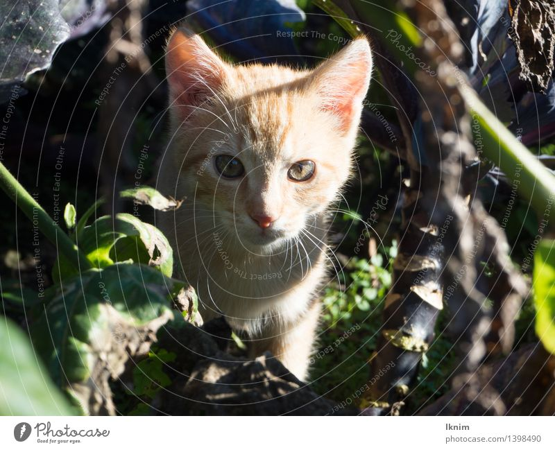 Cat in the undergrowth Nature Summer Bushes Animal Pet kitten 1 Observe Discover Wait Loneliness Lose Exposed Abandon Miss young cat Search leave sb. alone