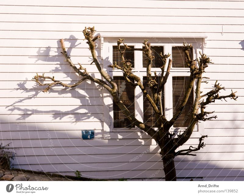 shadow parker Norway Tree Bergen Window Wood Wooden house Coast Shadow Sun Sunset Steep Street White Twigs and branches Branchage Summer