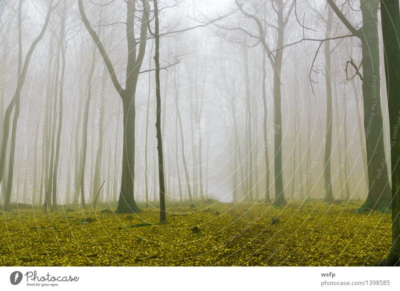 Fantasy forest with fog and yellow foliage Spring Autumn Fog Tree Leaf Forest Dream Yellow Surrealism magic fantasy Enchanted forest Enchanted wood Mystic
