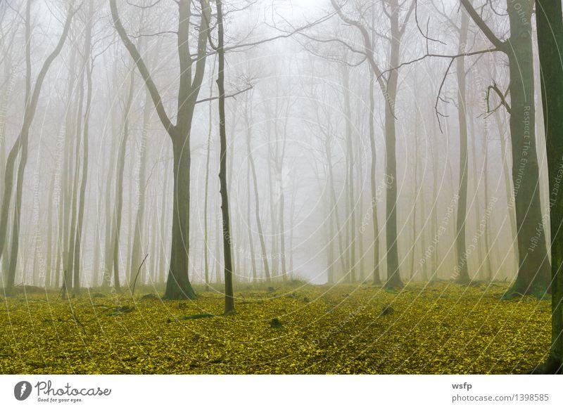 Tree Leaf Forest Yellow Autumn Spring Dream Fog Surrealism Magic Enchanting Mystic Fantasy literature Enchanted forest Enchanted wood