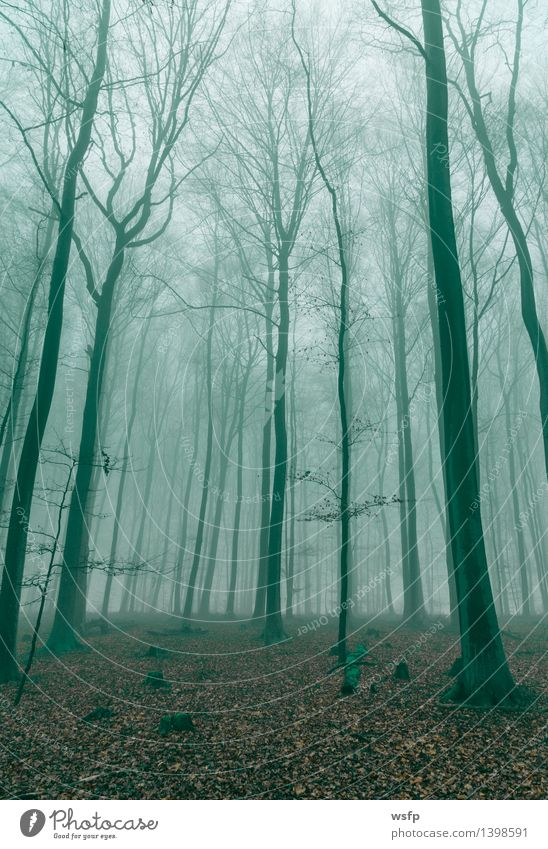 Fantasy forest in fog in green Spring Autumn Fog Tree Leaf Forest Dream Green Surrealism Dark green magic fantasy Enchanted forest Enchanted wood Mystic