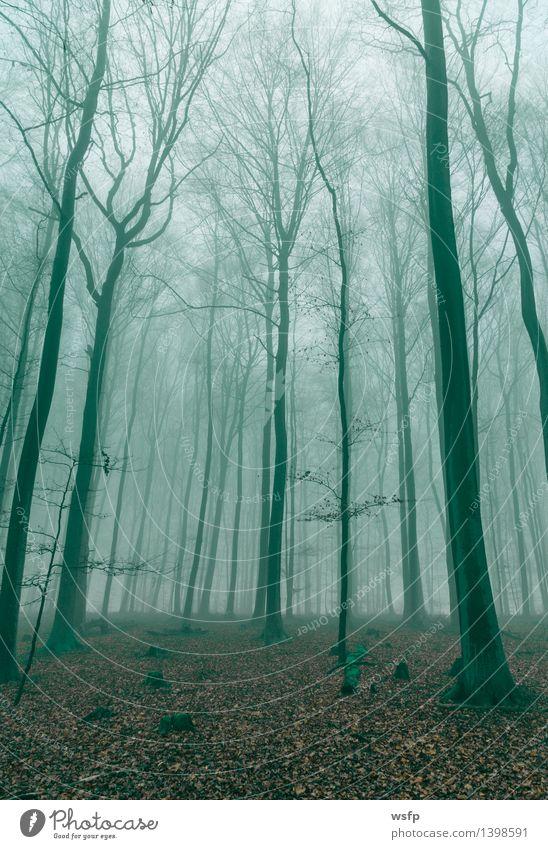 Green Tree Leaf Forest Autumn Spring Dream Fog Surrealism Magic Enchanting Mystic Fantasy literature Enchanted forest Dark green Enchanted wood