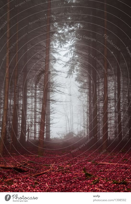 Dark forest in fog with red foliage Spring Autumn Fog Tree Leaf Forest Dream Surrealism magic fantasy Enchanted forest Enchanted wood Mystic discoloured