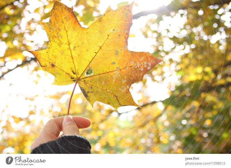 autumn lights Vacation & Travel Decoration Nature Air Sunlight Autumn Beautiful weather Plant Tree Leaf Garden Relaxation To dry up Yellow Gold Happy Happiness