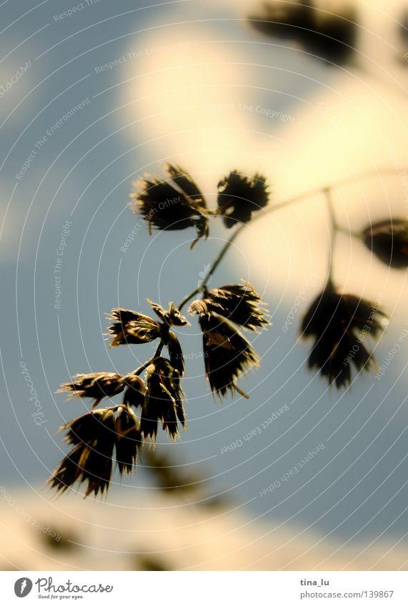 Sky White Sun Green Blue Summer Blossom Grass Spring Dream Warmth Brown Lighting Fresh Bushes Physics