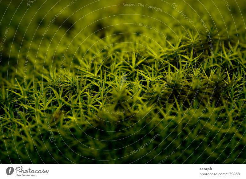 Moss Nature Plant Green Dark Environment Lighting Style Background picture Small Lamp Earth Star (Symbol) Soft Floor covering Universe Delicate