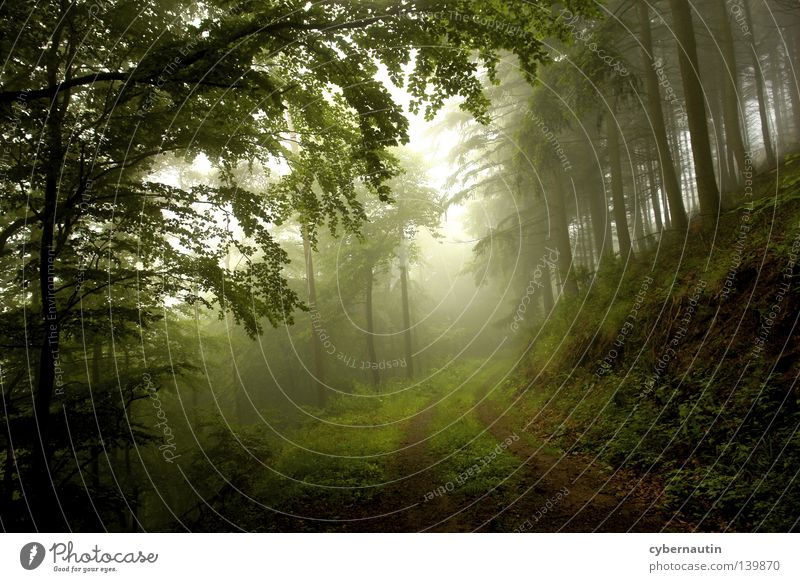 Nature Tree Green Forest Lanes & trails Fog Weather Hunting Drizzle