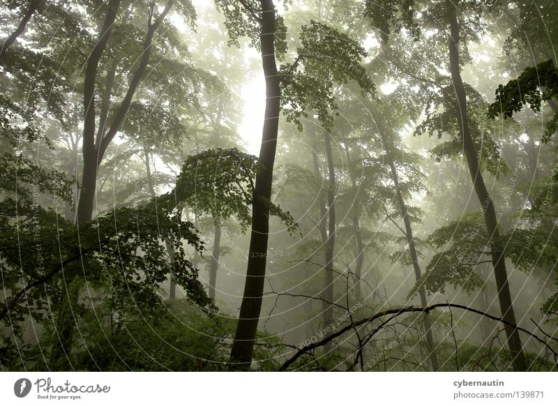 magic forest Forest Tree Undergrowth Fog Drizzle Green Branch Weather Hunting