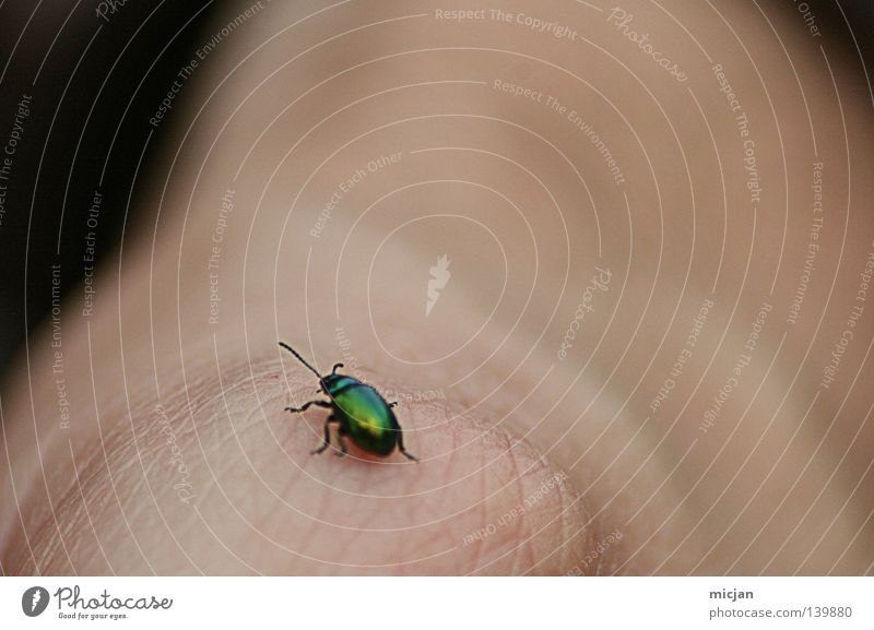 Green Hand Life Freedom Small Legs Lighting Flying Skin Arrangement Cute Search To hold on Living thing Insect