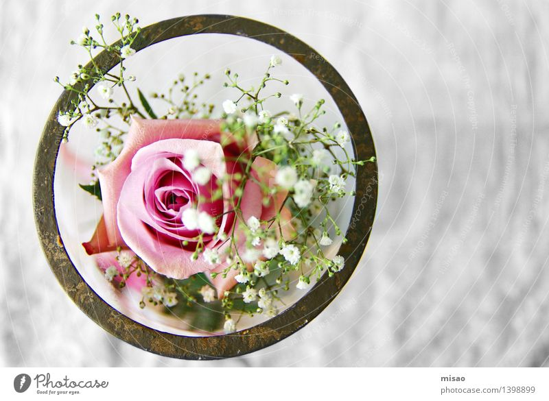 pink flower in glass Nature Plant Rose Blossom Bowl Glass Brown Green Pink White Happy Anticipation Infatuation Romance Curiosity Esthetic Table
