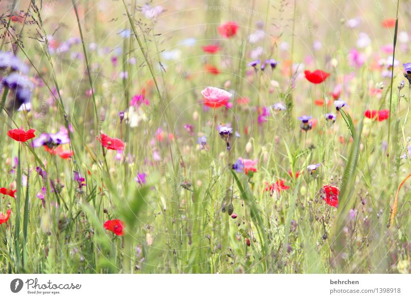 There it is again, Monday! Nature Plant Spring Summer Beautiful weather Flower Grass Leaf Blossom Wild plant Poppy Garden Park Meadow Blossoming Fragrance