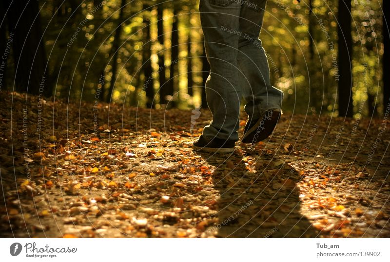 Feet in the light Leaf Forest Autumn To fall Legs Footwear Shoe sole Shadow Patch Tree Walking Going To go for a walk Forest walk Dirty Rotate Orange Green