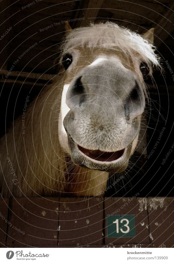 Happy 13 Animal Horse Barn Digits and numbers Wood Mane Farm Looking Happiness Equestrian sports Unlucky number Joy Mammal Numbers and numbers Laughter stables