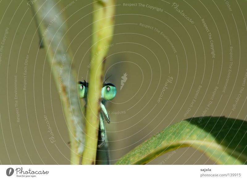 Green Leaf Eyes Animal Head Legs Europe Thin Insect Stalk Hide Behind Frontal Dragonfly Compound eye