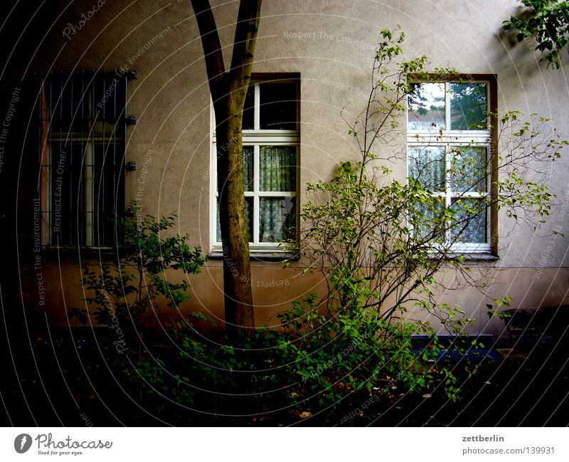 Tree Green Calm House (Residential Structure) Dark Window Fear Flat (apartment) Facade Bushes Peace Living or residing Mysterious Backyard Tenant