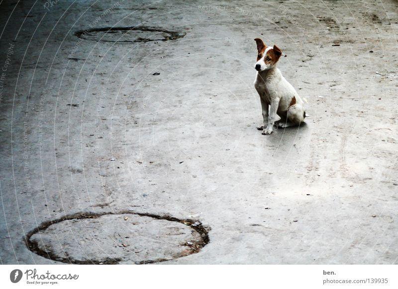 Street Dog Dirty India Puppy Delhi Wauwau