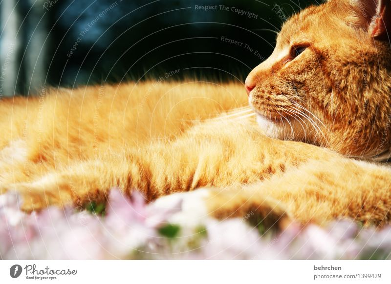 To rest in oneself Nature Plant Animal Spring Summer Beautiful weather Flower Leaf Blossom Garden Park Meadow Pet Cat Animal face Pelt 1 Observe Relaxation Lie
