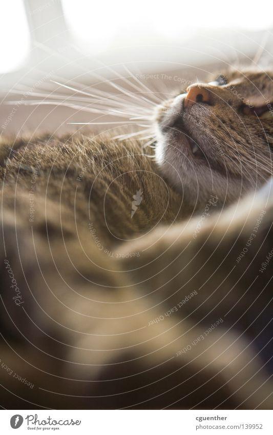 Cat Relaxation Eyes Nose Sleep Pelt Facial hair Paw Mammal Snout Muzzle Whisker Doze Beard hair