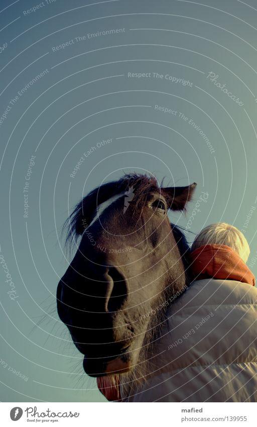 faith Horse Muzzle Snout Nostrils Lips Whisker Soft Odor Breathe Curiosity Contact Friendliness Trust Be confident Woman Blonde Embrace Relaxation Black Orange