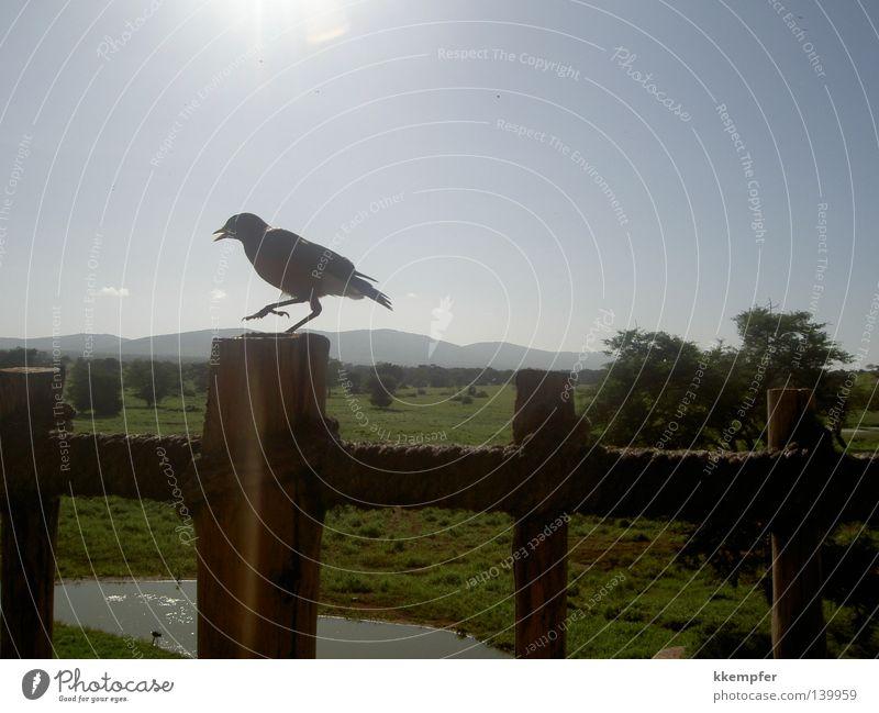 Lodge in Kenya Bird Safari Summer Animal Vacation & Travel Sun Africa
