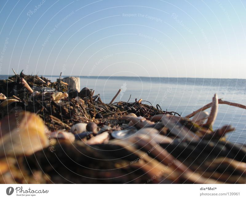 Dike sea view Ocean Sylt Germany Blue Mussel Water Wood Twigs and branches Untidy Slyt Stick View to the sea