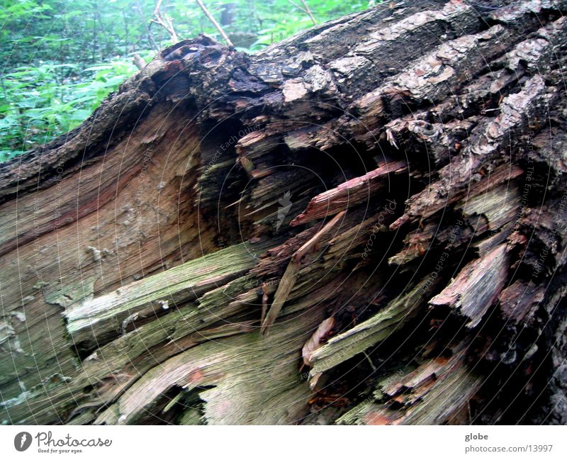 Forest Wood Tree bark Splinter Tree stump