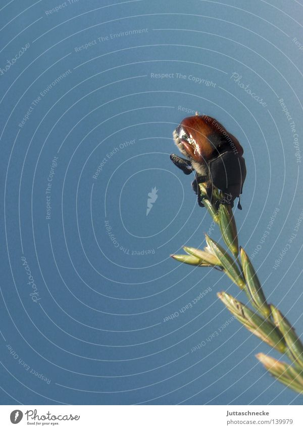 Nature Sky Blue Summer Contentment Field Success End Climbing Insect Point Grain Blade of grass Mountaineering Beetle