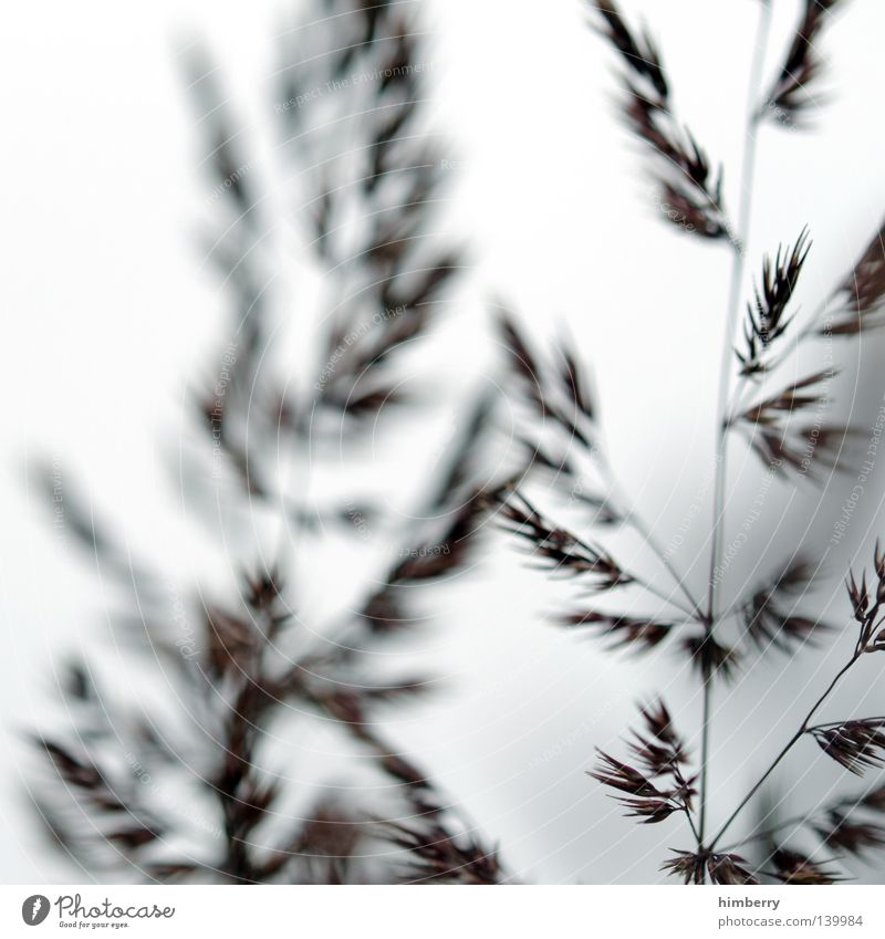 saint etienne Grass Fern Plant Nature Blade of grass Macro (Extreme close-up) Park Horticulture White Goodbye Salutation Background picture Seed