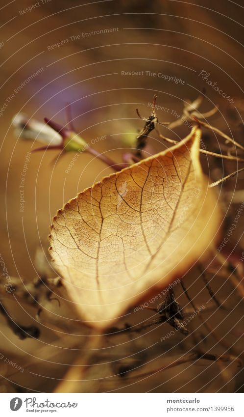 Nature Old Plant Leaf Cold Environment Yellow Autumn Natural Brown Wild Gloomy Authentic Point Simple Transience