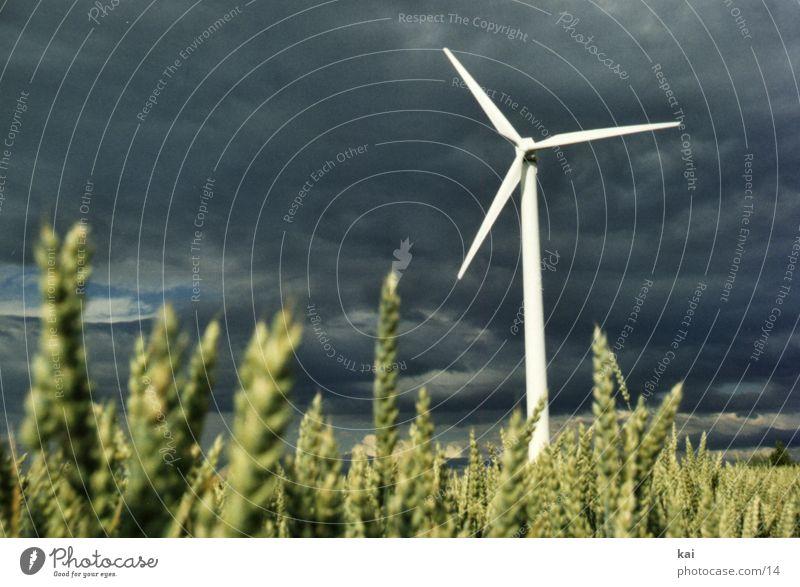 Clouds Field Grain Wind energy plant Agriculture Ear of corn Grain field
