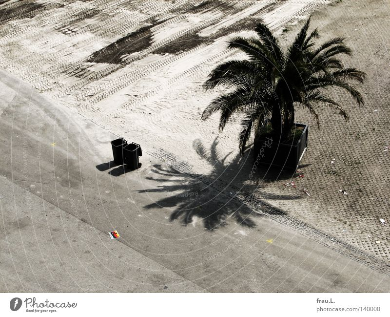dustbins Palm tree Trash container Beach Places Past Event German Flag Brochure Final Doomed Playing Club Sand Desert Street fan festival EM End Lie in the dirt